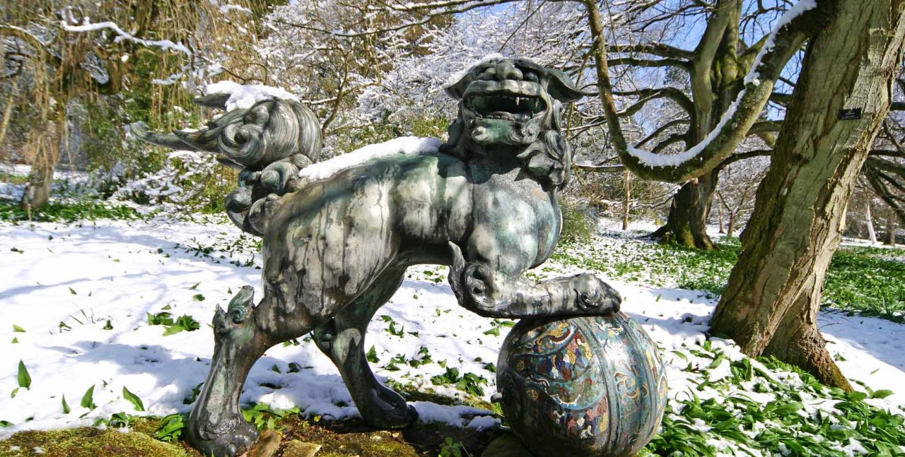 foo dog winter